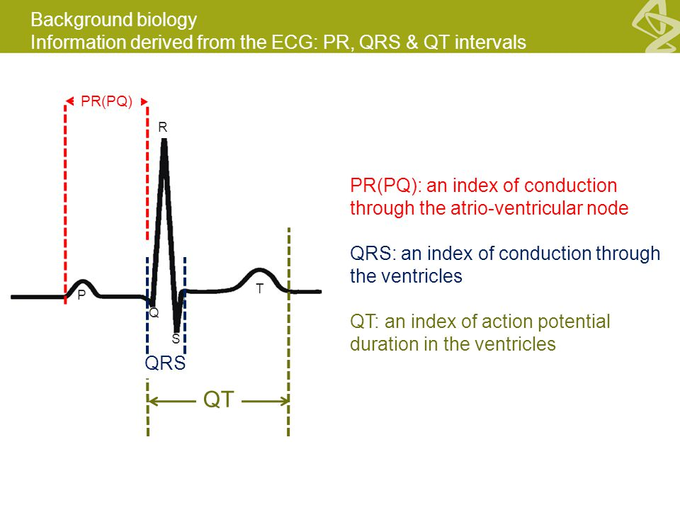 Background biology Information derived from the ECG: PR, QRS & QT intervals PR(PQ) QRS QT PR(PQ): an index of conduction through the atrio-ventricular node QRS: an index of conduction through the ventricles QT: an index of action potential duration in the ventricles P T Q S R