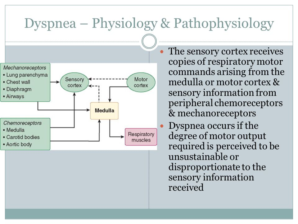 Dyspnea – Physiology & Pathophysiology The sensory cortex receives copies of respiratory motor commands arising from the medulla or motor cortex & sen
