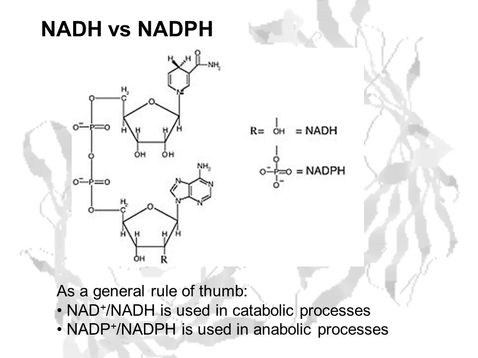 NADH vs NADPH As a general rule of thumb: NAD + /NADH is used in catabolic processes NADP + /NADPH is used in anabolic processes