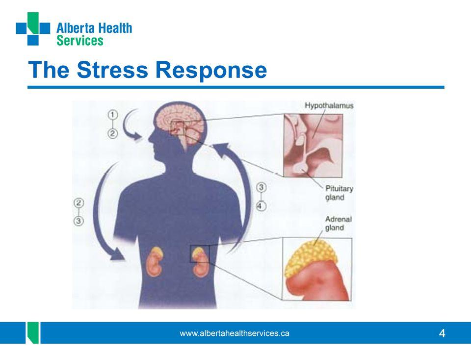 4 The Stress Response