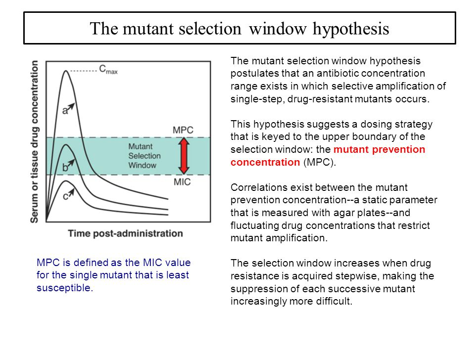 The mutant selection window hypothesis The mutant selection window hypothesis postulates that an antibiotic concentration range exists in which selective amplification of single-step, drug-resistant mutants occurs.