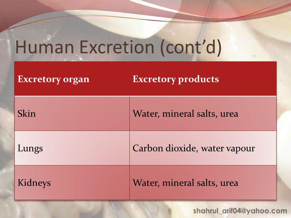 Human Excretion (cont'd)