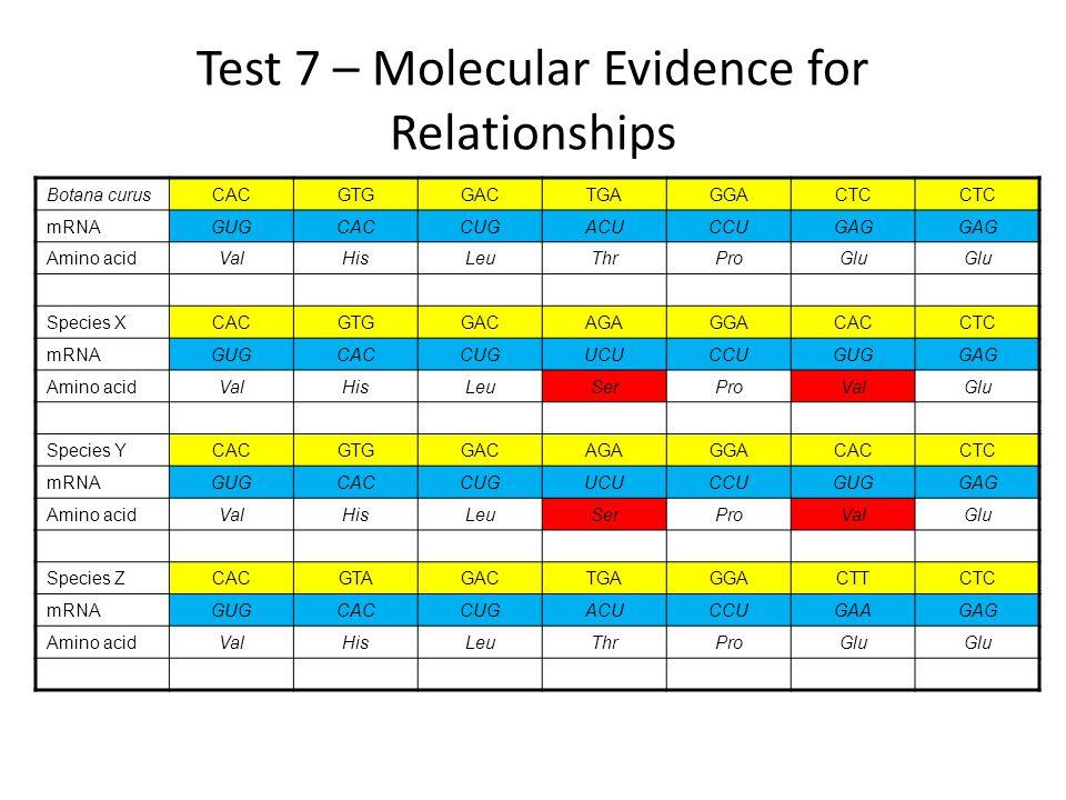 Test 7 – Molecular Evidence for Relationships Botana curusCACGTGGACTGAGGACTC mRNAGUGCACCUGACUCCUGAG Amino acidValHisLeuThrProGlu Species XCACGTGGACAGAGGACACCTC mRNAGUGCACCUGUCUCCUGUGGAG Amino acidValHisLeuSerProValGlu Species YCACGTGGACAGAGGACACCTC mRNAGUGCACCUGUCUCCUGUGGAG Amino acidValHisLeuSerProValGlu Species ZCACGTAGACTGAGGACTTCTC mRNAGUGCACCUGACUCCUGAAGAG Amino acidValHisLeuThrProGlu