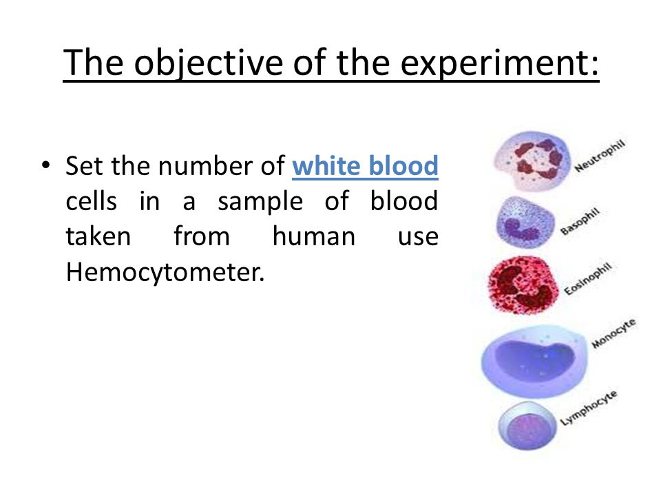 The objective of the experiment: Set the number of white blood cells in a sample of blood taken from human use Hemocytometer.