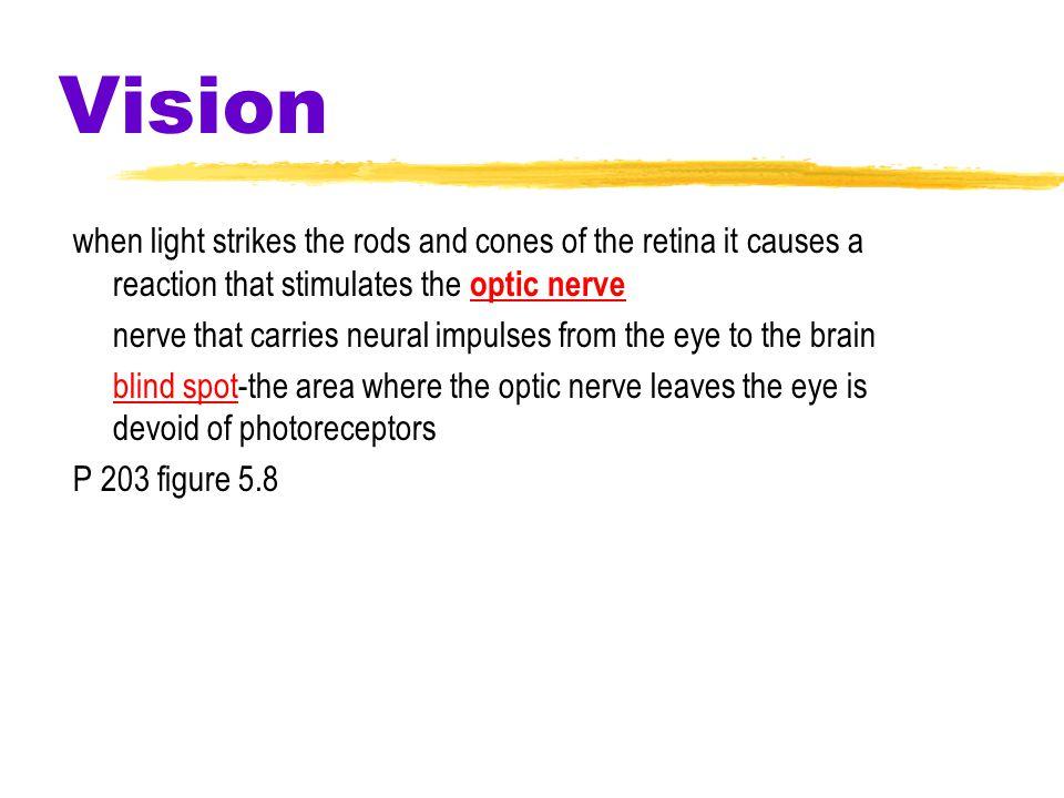Vision- Receptors Receptors in the Human Eye ConesRods Number Location in retina Sensitivity in dim light Color sensitive?Yes Low Center 6 million No