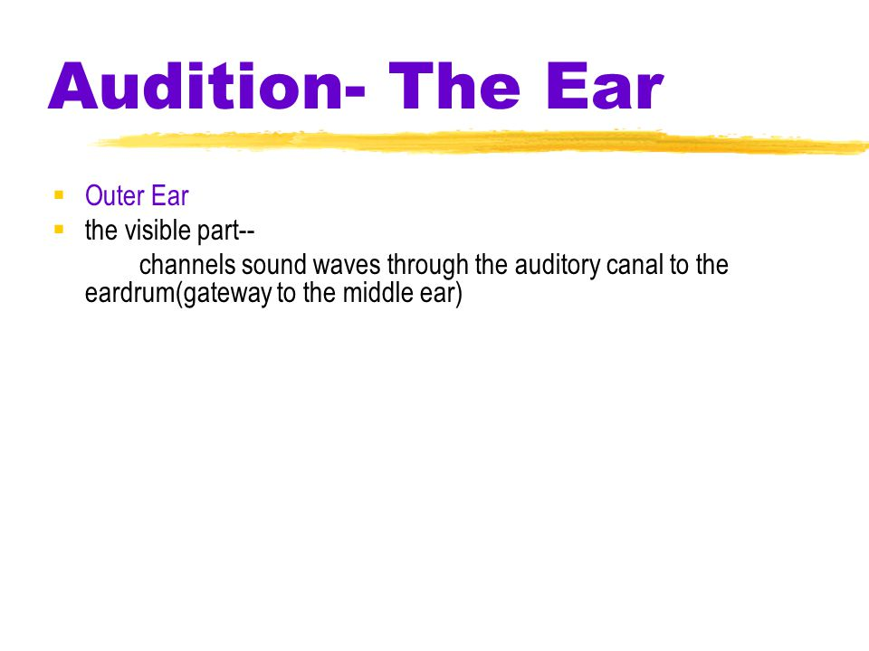 Audition  frequency -(the # of wavelengths that pass a point per second) determines Pitch  pitch –a tone's highness or lowness longer the wave/lower