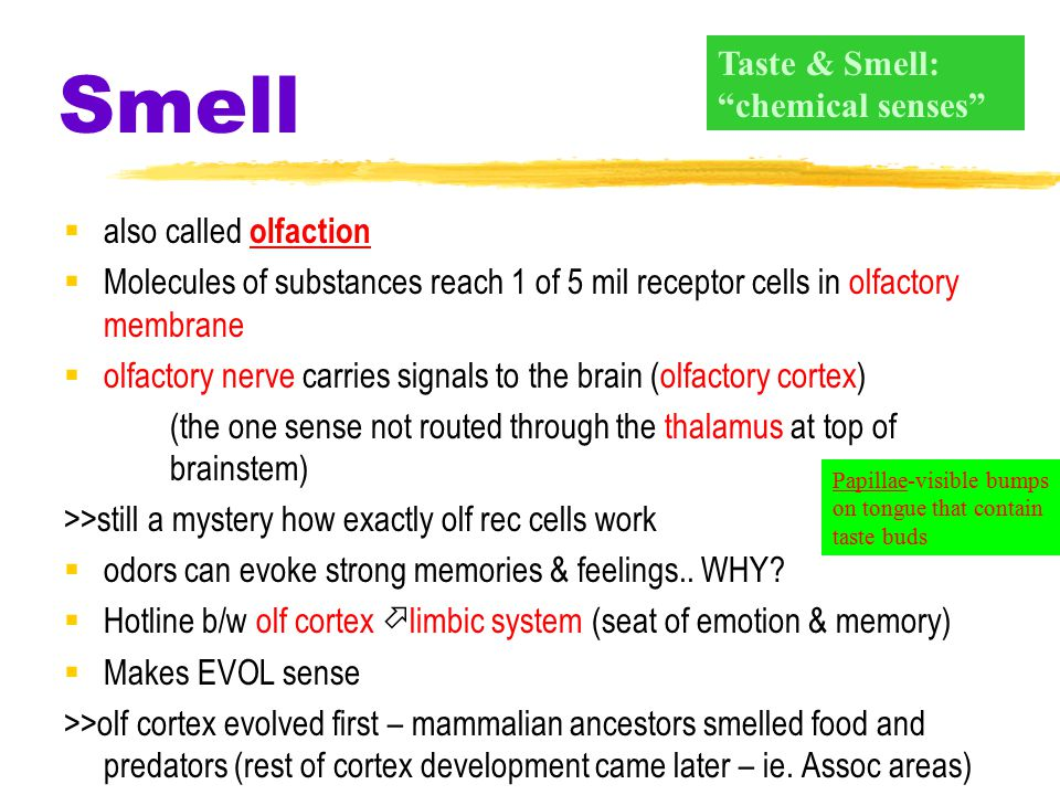 Taste  Sensory Interaction one sense influences another especially true with taste and smell >>people who've lost sense of smell think they've lost t