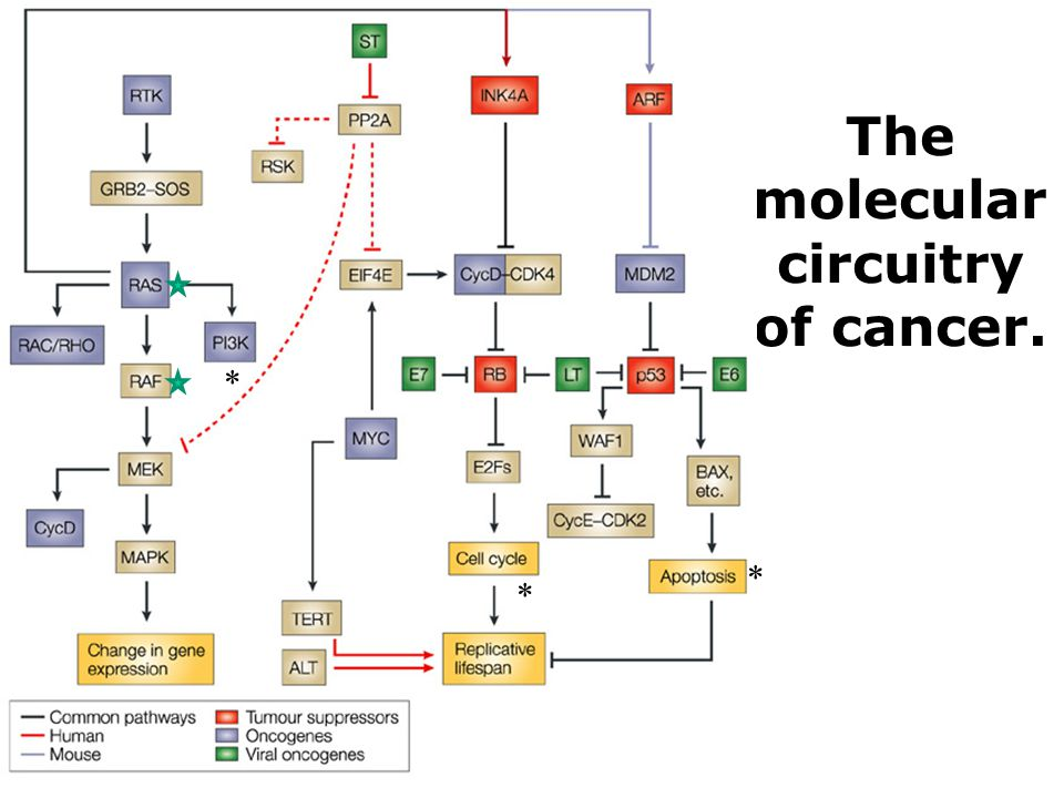 The molecular circuitry of cancer. * * *