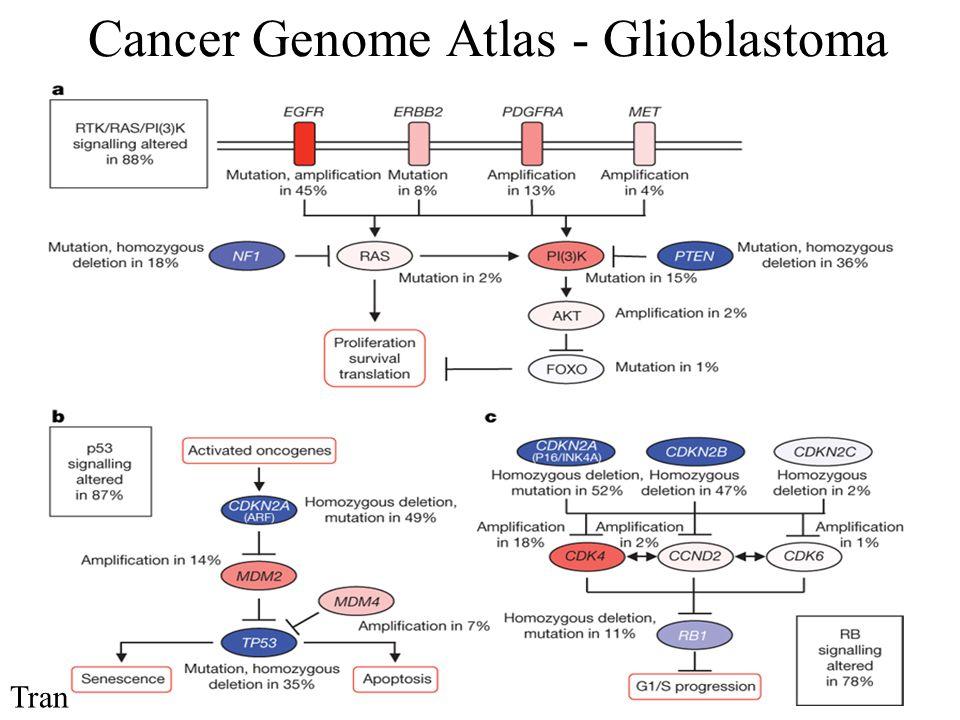 Cancer Genome Atlas - Glioblastoma Tran