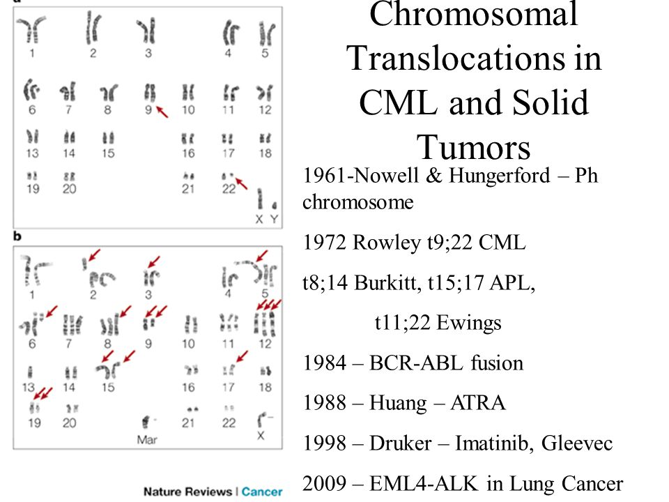 Chromosomal Translocations in CML and Solid Tumors 1961-Nowell & Hungerford – Ph chromosome 1972 Rowley t9;22 CML t8;14 Burkitt, t15;17 APL, t11;22 Ew