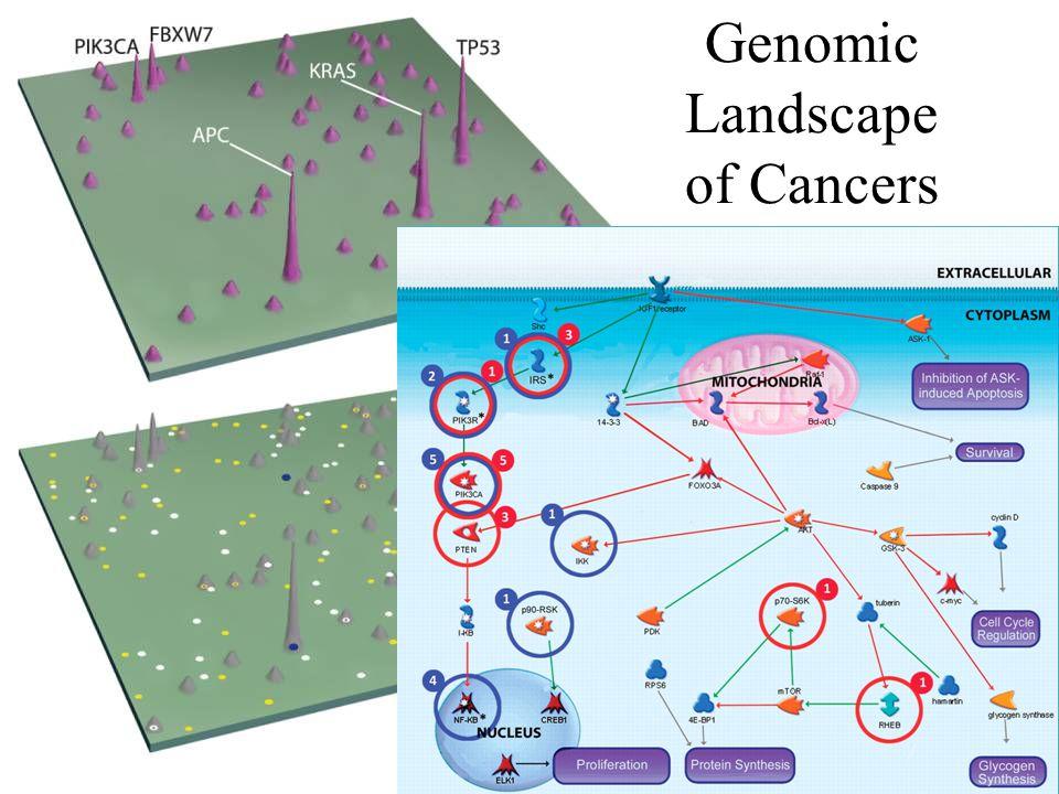 Genomic Landscape of Cancers