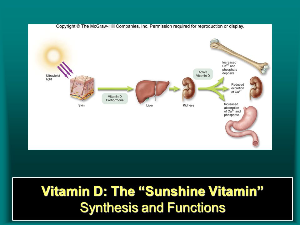 "Insert Figure 8.10Insert Figure 8.10 Vitamin D: The ""Sunshine Vitamin"" Synthesis and Functions"
