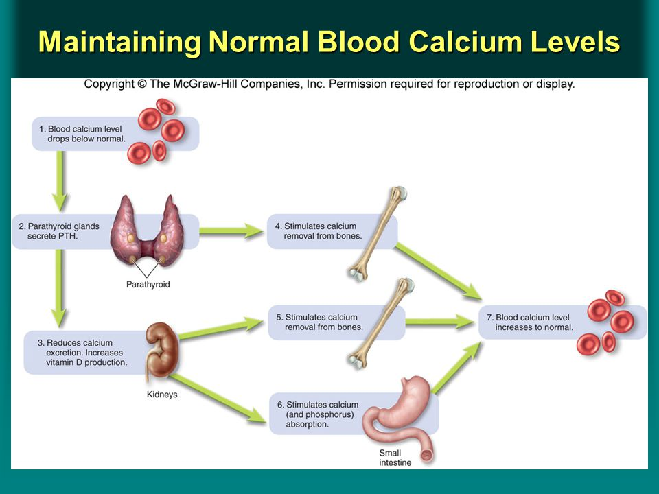 Insert Figure 8.11Insert Figure 8.11 Maintaining Normal Blood Calcium Levels