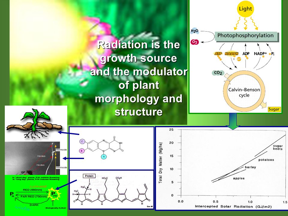 Radiation is the growth source and the modulator of plant morphology and structure