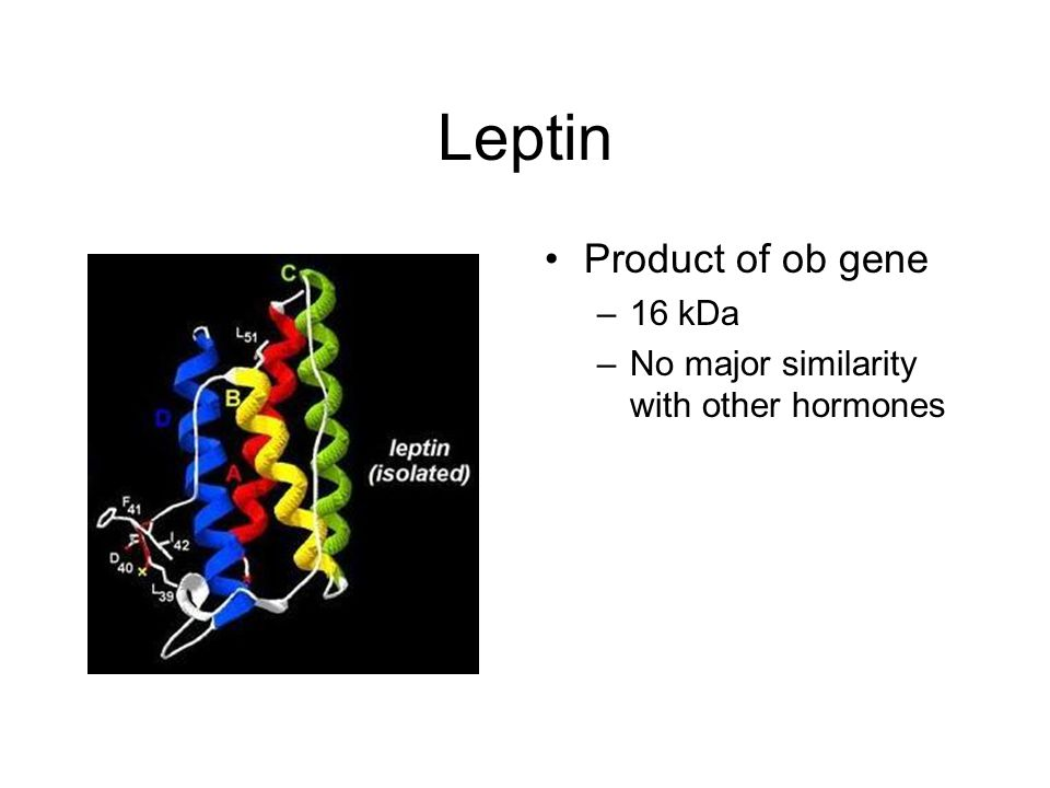 Leptin Product of ob gene –16 kDa –No major similarity with other hormones