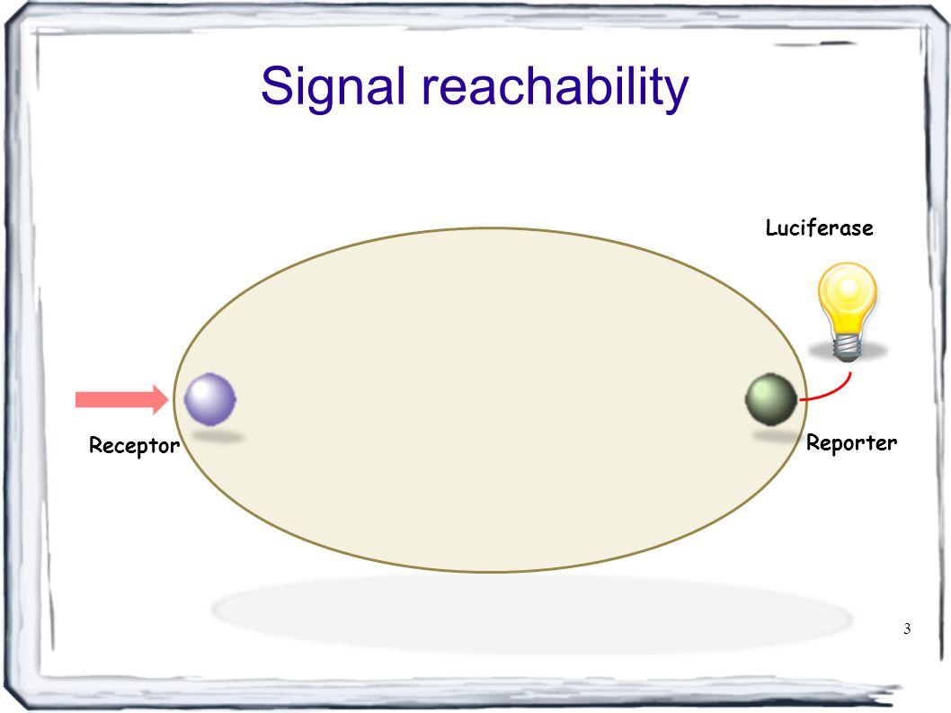 Signal reachability 3 Receptor Reporter Luciferase