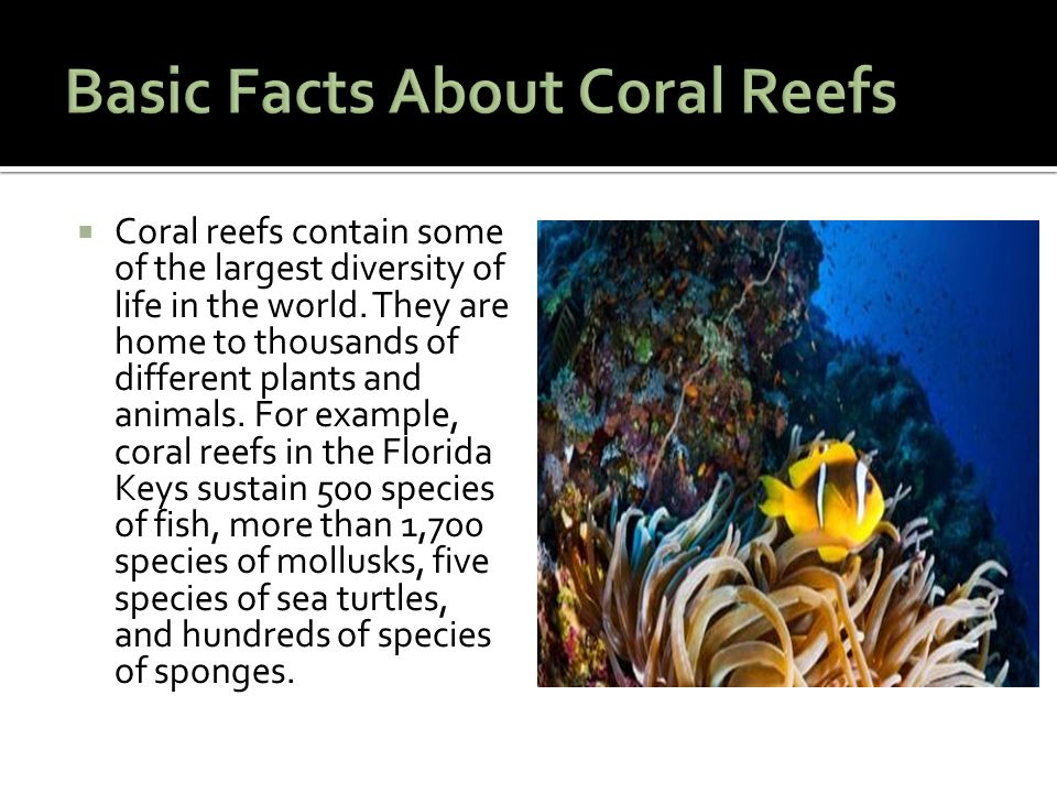  Coral reefs contain some of the largest diversity of life in the world.