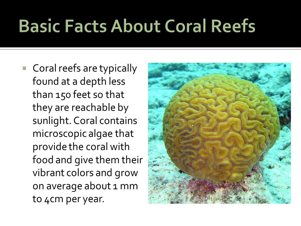  Coral reefs are typically found at a depth less than 150 feet so that they are reachable by sunlight.