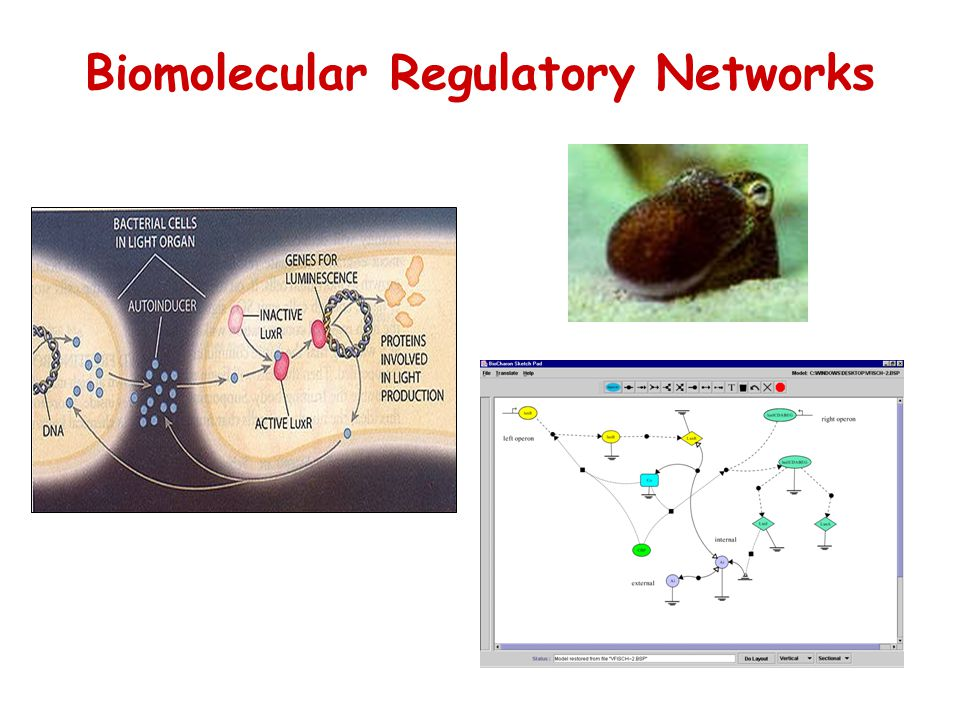 Biomolecular Regulatory Networks