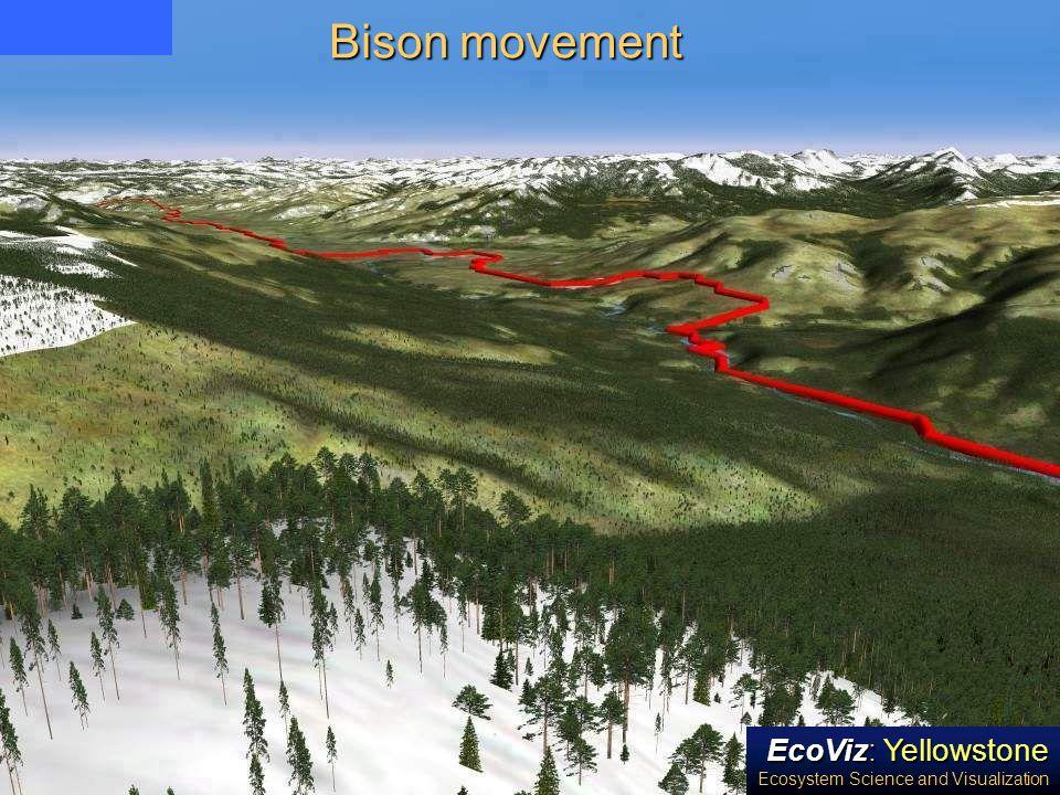 Bison movement