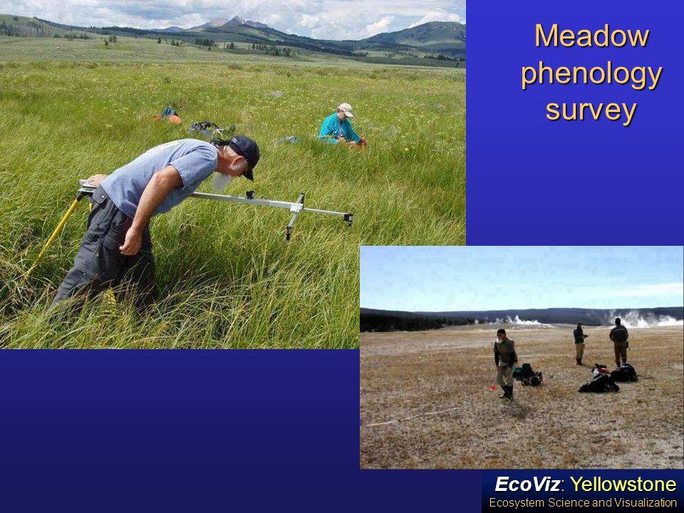 EcoViz: Yellowstone Ecosystem Science and Visualization Meadow phenology survey