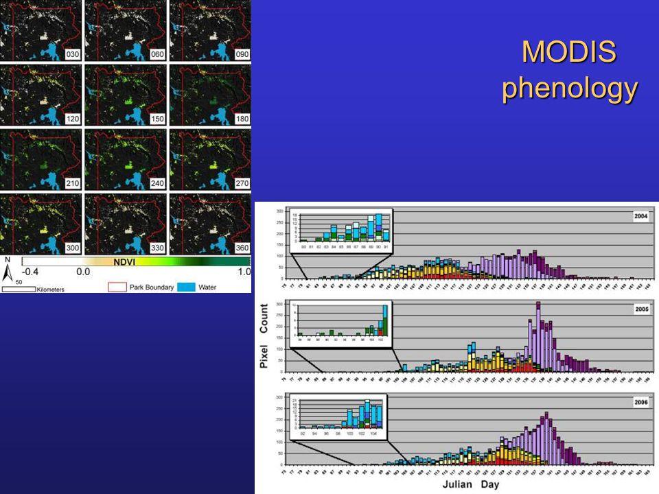 MODIS phenology