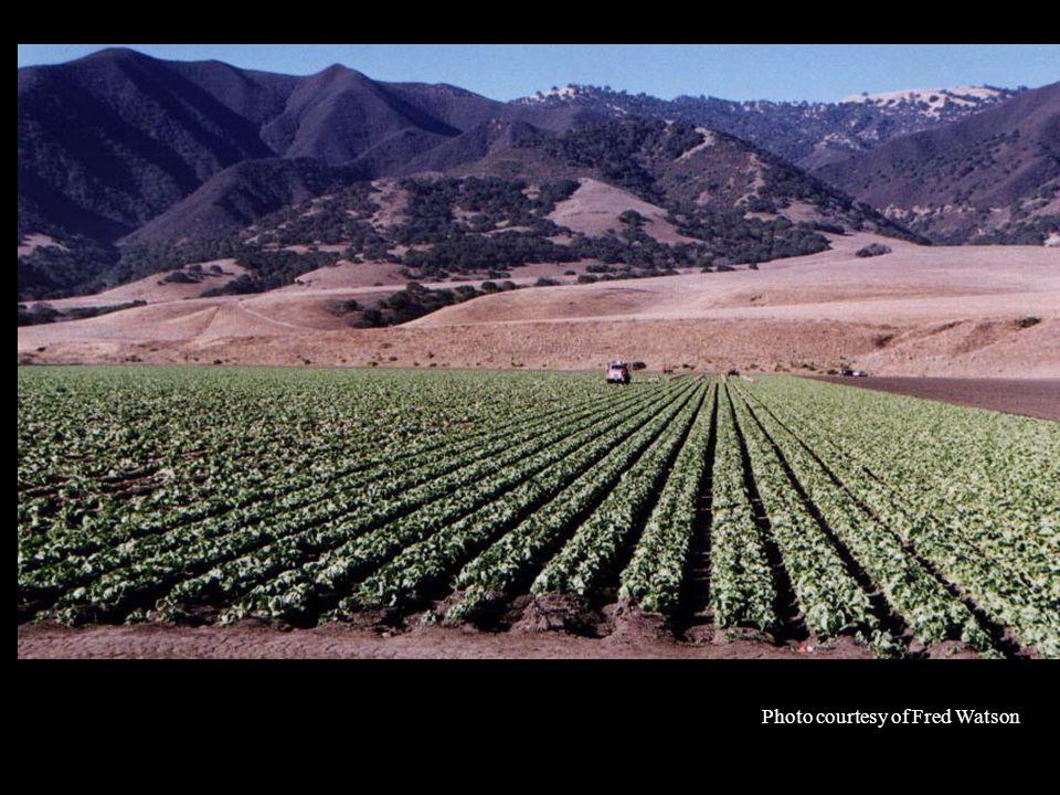 Salinas Valley of the Future.