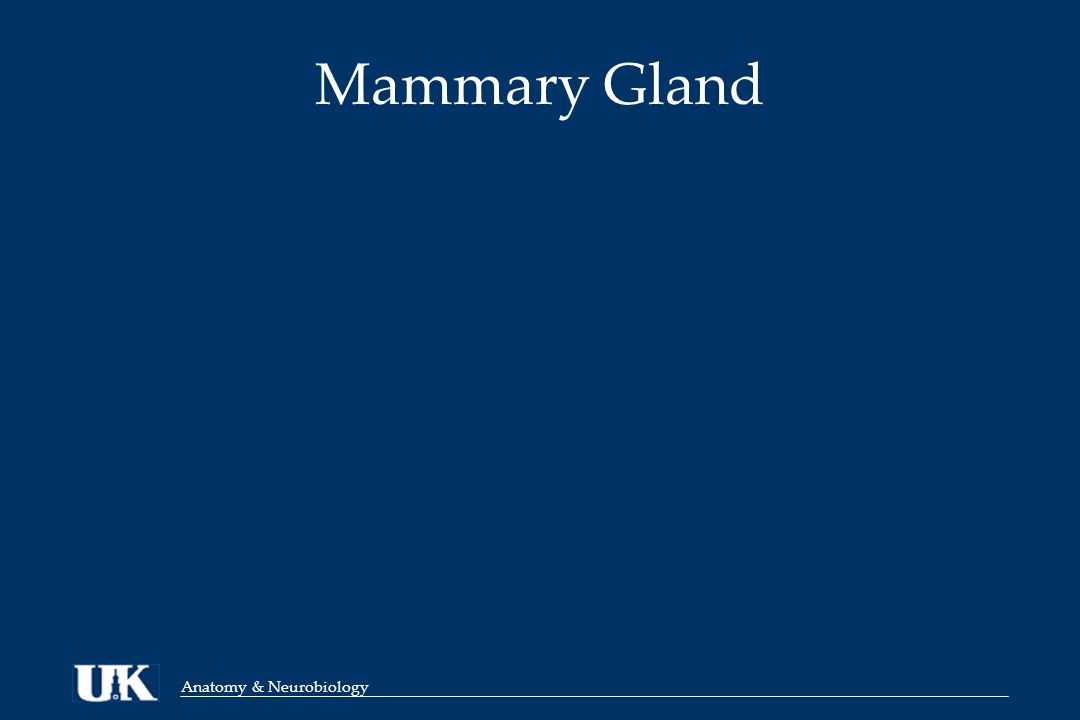 Anatomy & Neurobiology Mammary Gland