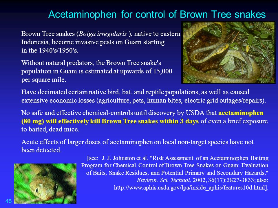 Acetaminophen for control of Brown Tree snakes Brown Tree snakes (Boiga irregularis ), native to eastern Indonesia, become invasive pests on Guam star