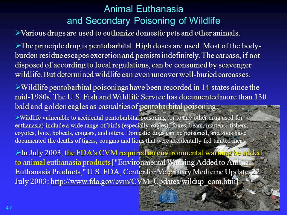 Animal Euthanasia and Secondary Poisoning of Wildlife Various drugs are used to euthanize domestic pets and other animals.  Various drugs are used to