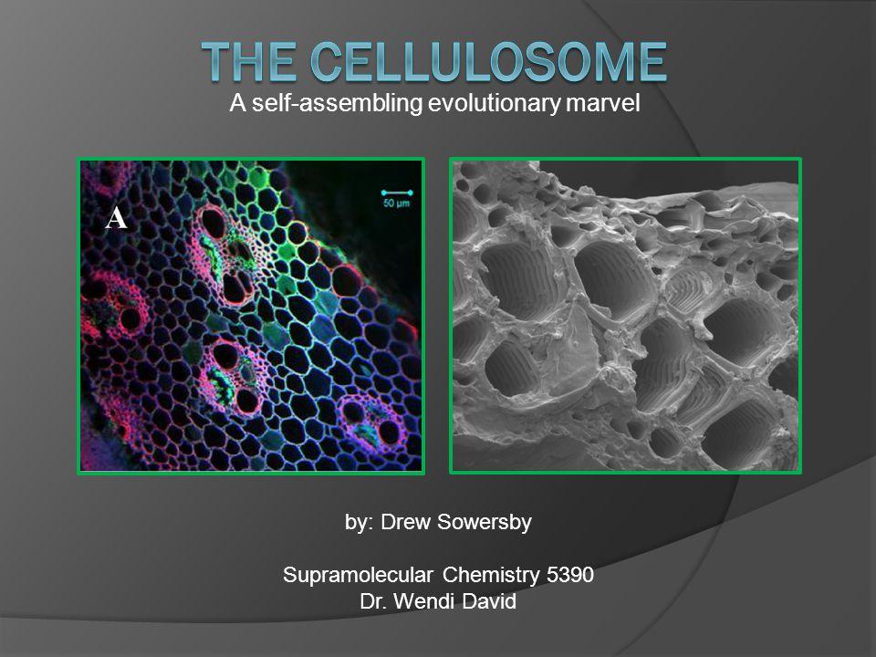 A self-assembling evolutionary marvel by: Drew Sowersby Supramolecular Chemistry 5390 Dr. Wendi David
