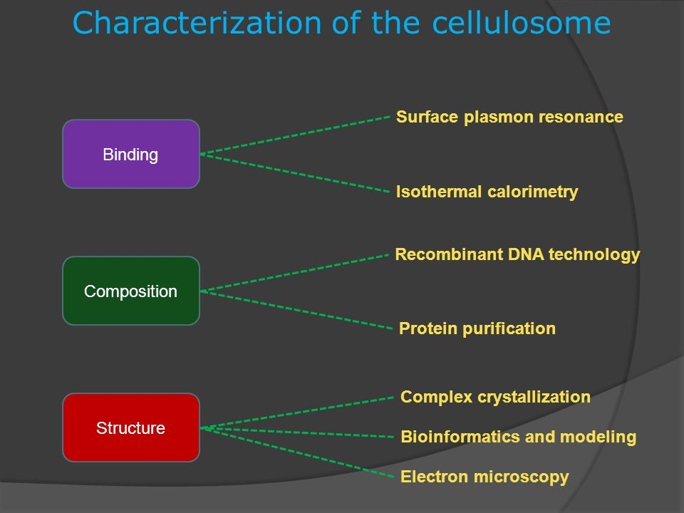 Characterization of the cellulosome Complex crystallization Isothermal calorimetry Protein purification Recombinant DNA technology Bioinformatics and modeling Electron microscopy Surface plasmon resonance Binding Structure Composition