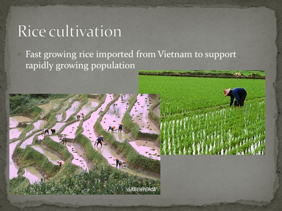 Fast growing rice imported from Vietnam to support rapidly growing population