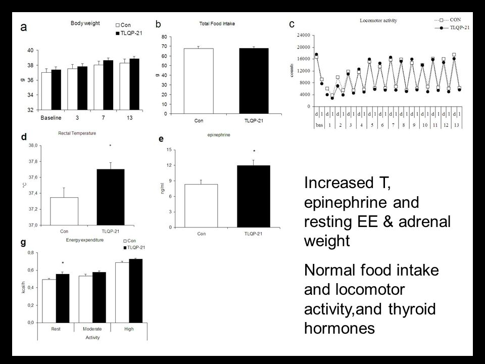 Increased T, epinephrine and resting EE & adrenal weight Normal food intake and locomotor activity,and thyroid hormones