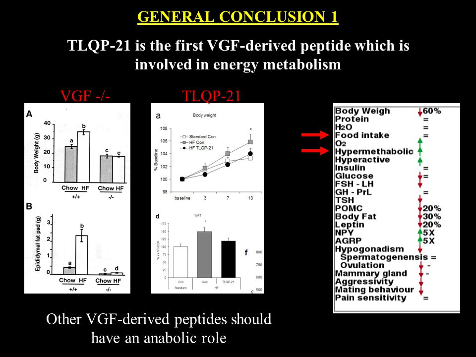 GENERAL CONCLUSION 1 TLQP-21 is the first VGF-derived peptide which is involved in energy metabolism Other VGF-derived peptides should have an anabolic role VGF -/- TLQP-21