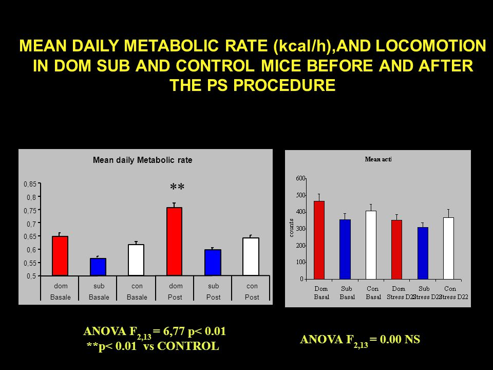 Mean daily Metabolic rate 0,5 0,55 0,6 0,65 0,7 0,75 0,8 0,85 domsubcondomsubcon Basale Post MEAN DAILY METABOLIC RATE (kcal/h),AND LOCOMOTION IN DOM SUB AND CONTROL MICE BEFORE AND AFTER THE PS PROCEDURE ** ANOVA F 2,13 = 6,77 p< 0.01 **p< 0.01 vs CONTROL ANOVA F 2,13 = 0.00 NS