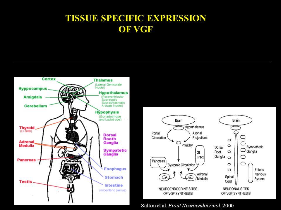 TISSUE SPECIFIC EXPRESSION OF VGF Salton et al. Front Neuroendocrinol, 2000