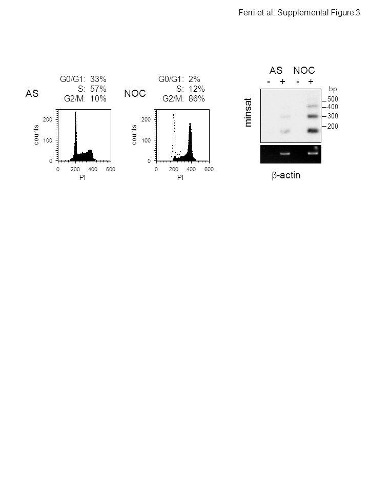 -+-+ ASNOC minsat  -actin AS 0400 0 100 200 600 G0/G1: 33% S: 57% G2/M: 10% NOC 0400 0 100 200 600 G0/G1: 2% S: 12% G2/M: 86% Ferri et al.