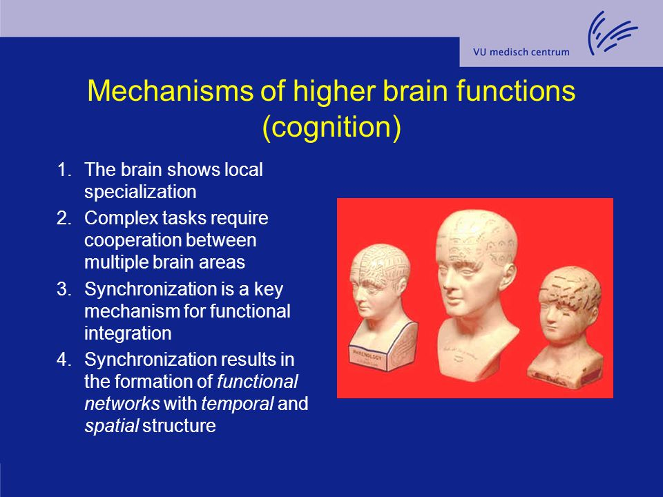 Mechanisms of higher brain functions (cognition) 1.The brain shows local specialization 2.Complex tasks require cooperation between multiple brain are