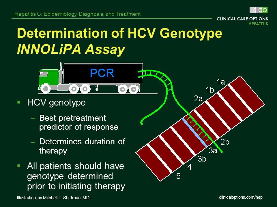 clinicaloptions.com/hep Hepatitis C: Epidemiology, Diagnosis, and Treatment Determination of HCV Genotype INNOLiPA Assay  HCV genotype –Best pretreat