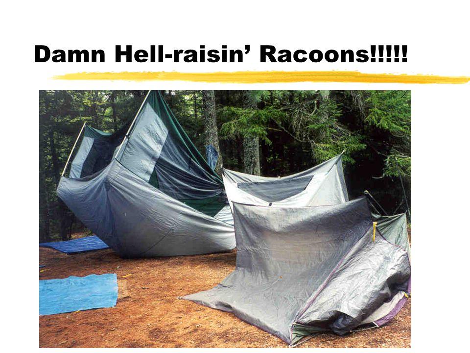 Damn Hell-raisin' Racoons!!!!!
