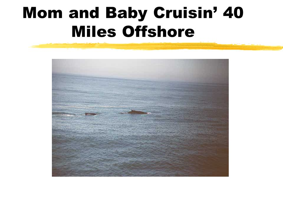 Mom and Baby Cruisin' 40 Miles Offshore
