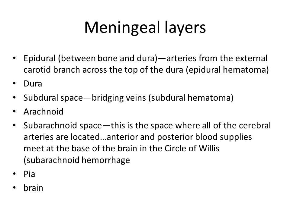 Meningeal layers Epidural (between bone and dura)—arteries from the external carotid branch across the top of the dura (epidural hematoma) Dura Subdur