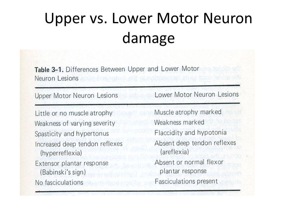 Upper vs. Lower Motor Neuron damage
