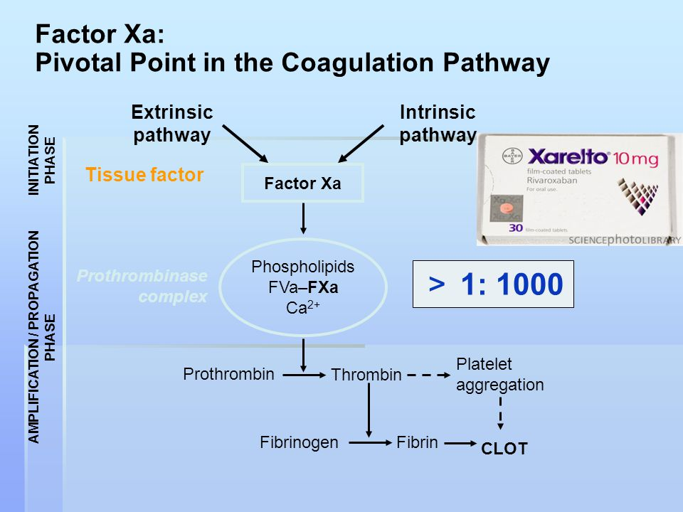 Factor Xa: Pivotal Point in the Coagulation Pathway Factor Xa Phospholipids FVa–FXa Ca 2+ Intrinsic pathway Extrinsic pathway Prothrombin Thrombin Fib