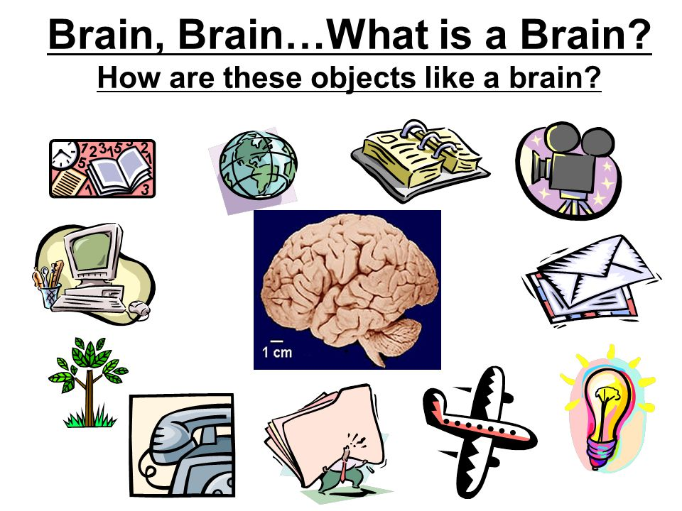 Brain, Brain…What is a Brain How are these objects like a brain