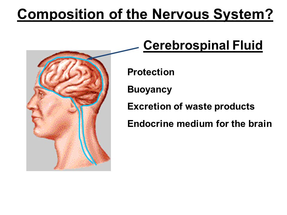 Composition of the Nervous System.