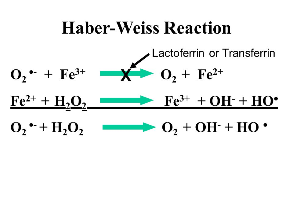 O 2  - + Fe 3+ O 2 + Fe 2+ Fe 2+ + H 2 O 2 Fe 3+ + OH - + HO  O 2  - + H 2 O 2 O 2 + OH - + HO  X Lactoferrin or Transferrin Haber-Weiss Reaction