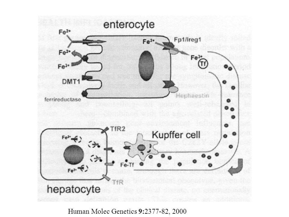 Human Molec Genetics 9:2377-82, 2000