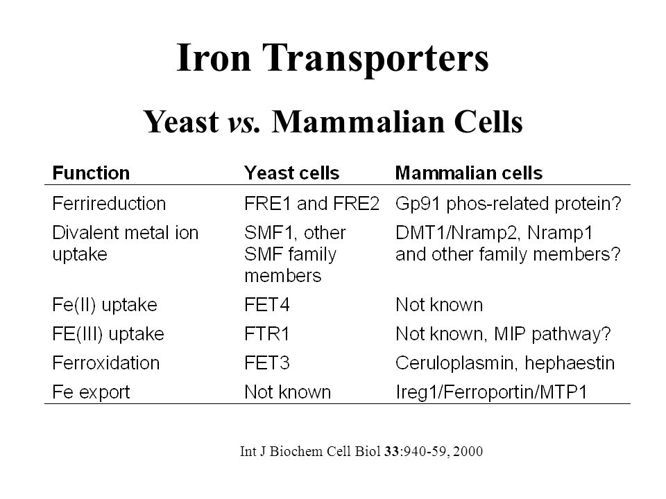 Int J Biochem Cell Biol 33:940-59, 2000 Iron Transporters Yeast vs. Mammalian Cells